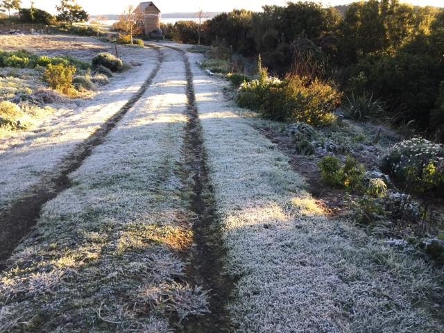 Frost on driveway