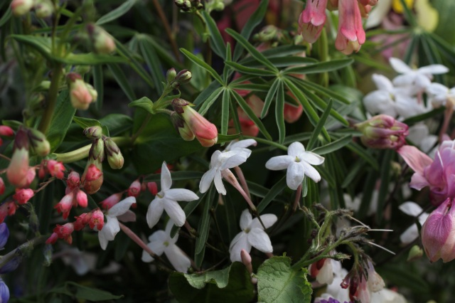 jasmine and penstemon cut flowers