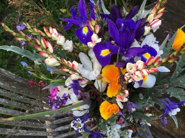 Dutch Iris and ixia cut flowere
