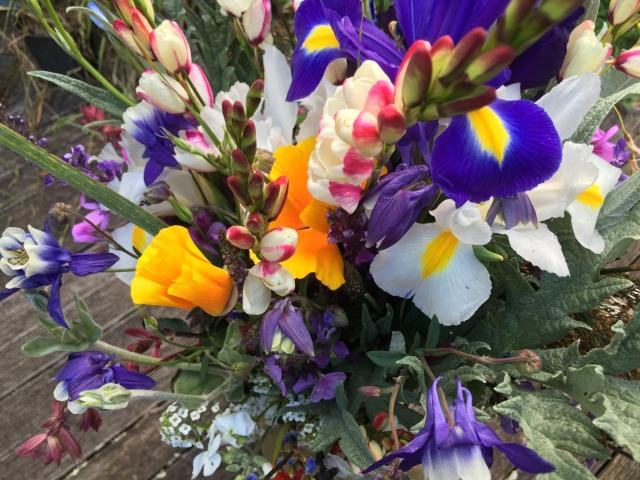 Iris cut flowers
