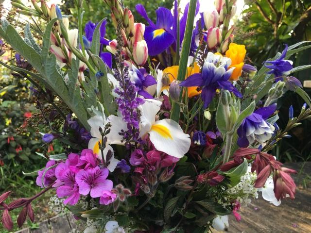 Salvia Wendy's wish cut flower