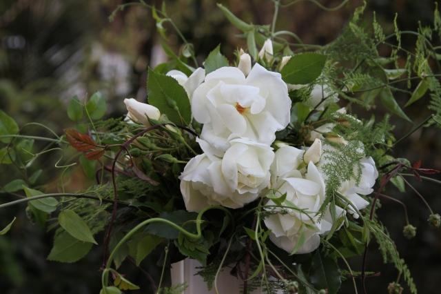 iceberg roses cut flowers