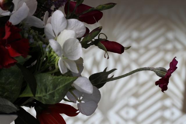 carnation hydrangea lychnis cut flower