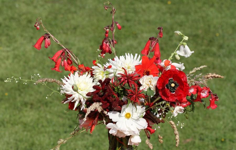 dahlia poppy monarda kangaroo paw