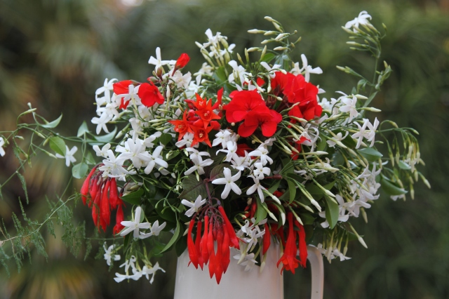 fuchsia geranium cut flower