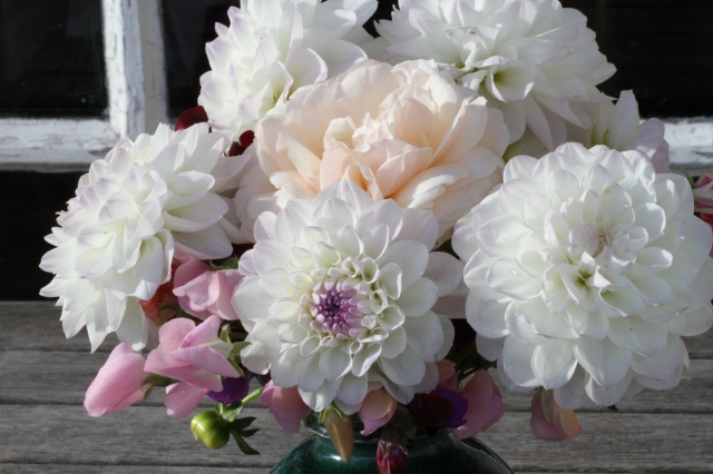dahlia eveline cut flower