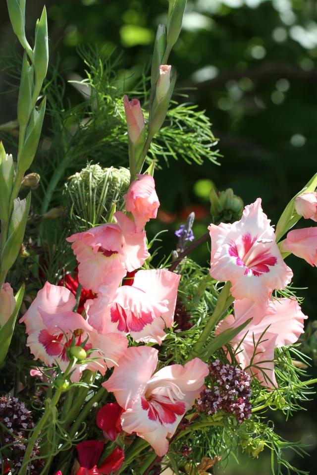 gladiolus cut flowers