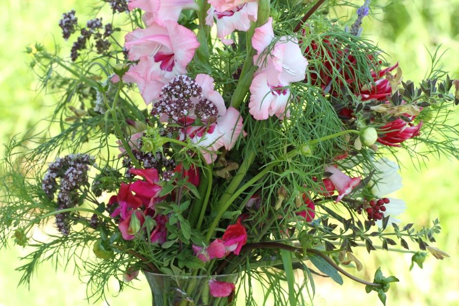 gladiolus oregano cut flowers