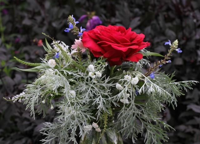 rose deep secret with achillia the pearl and artemisia