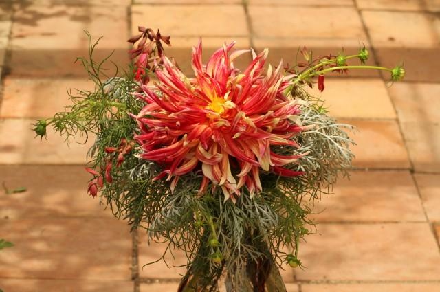 dahlia cut flower