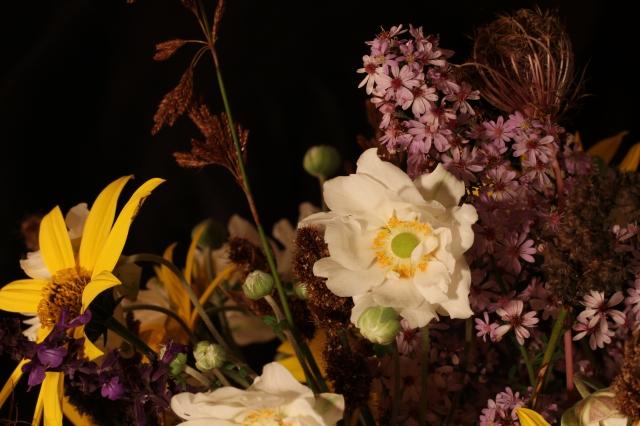 anemone aster restios salvia