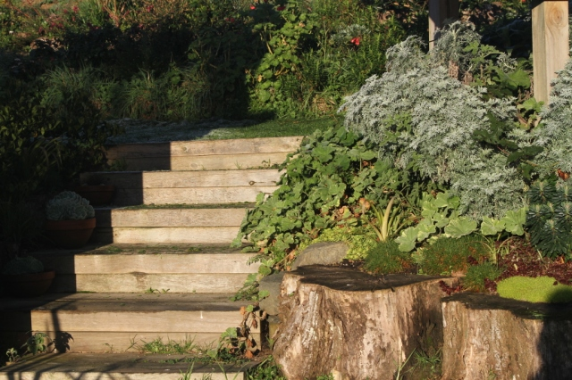 frosty ground cover and stairs in the solar panel garden
