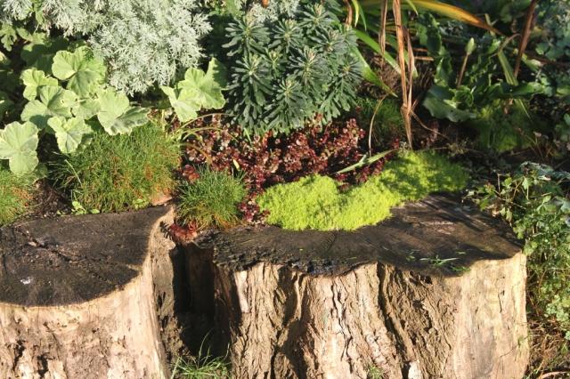 ground cover in the solar panel garden 1024