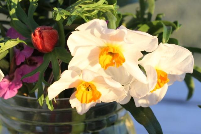 daffodil Geranium 1024