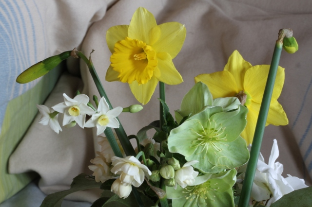 hellebore sternii and narcissus cut flowers