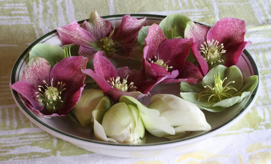 hellebores and michaelia bubble