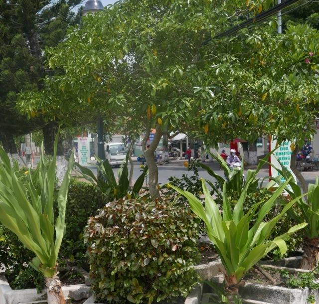 Public planting Chau Doc