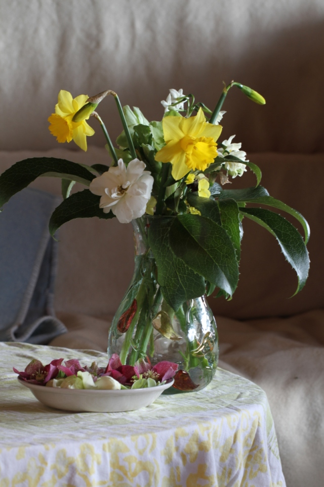 narcissus cut flowers