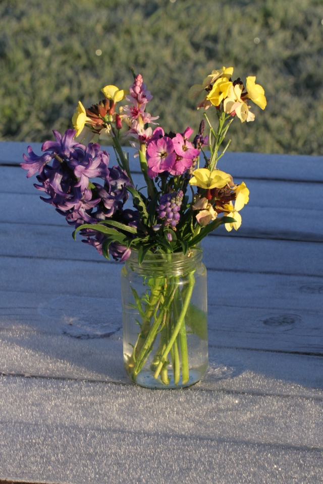wallflowers wurmbea cut flowers 900