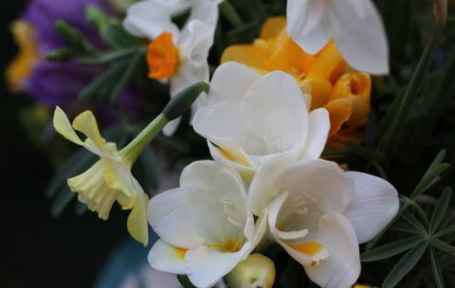 Freesias and daffodils cut flowers