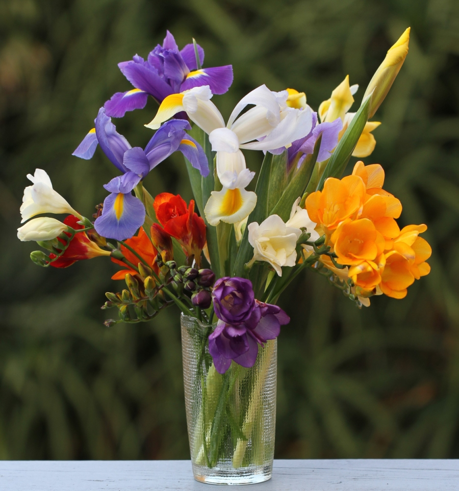 freesias-dutch-iris-cut-flowers