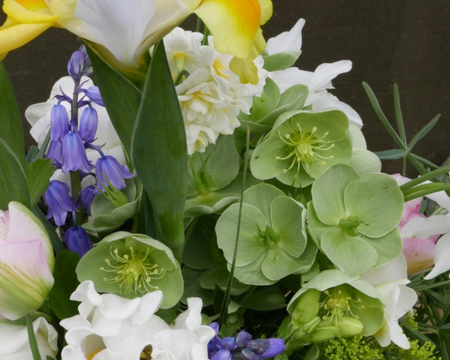 Scilla blue bells and hellebores