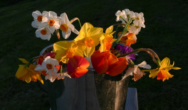 Cut flowers photography sunset