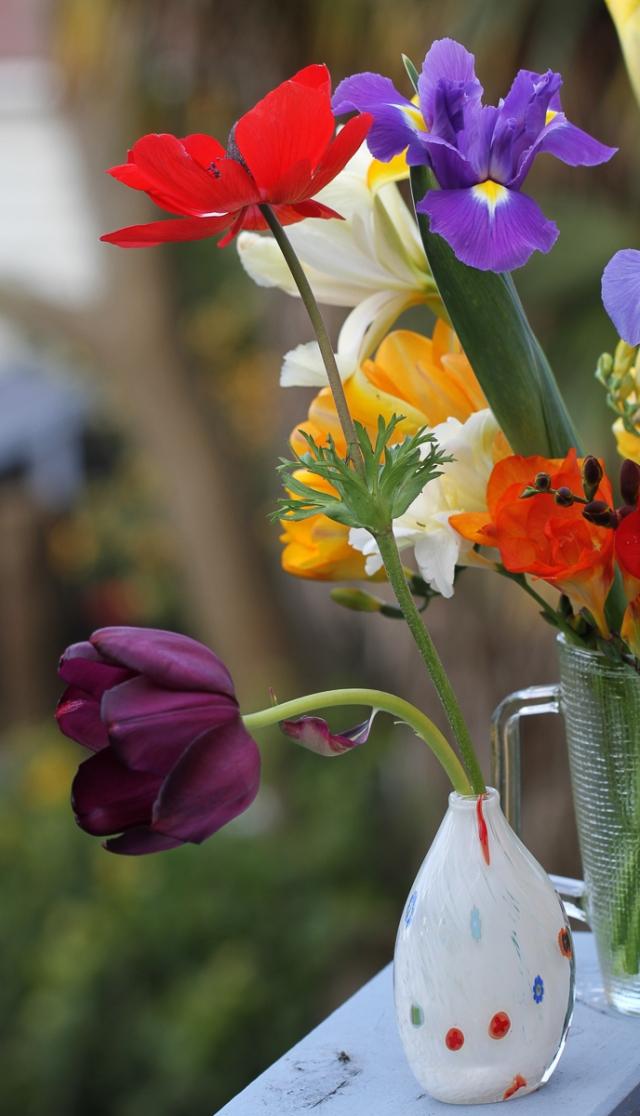 tulip-and-anemone