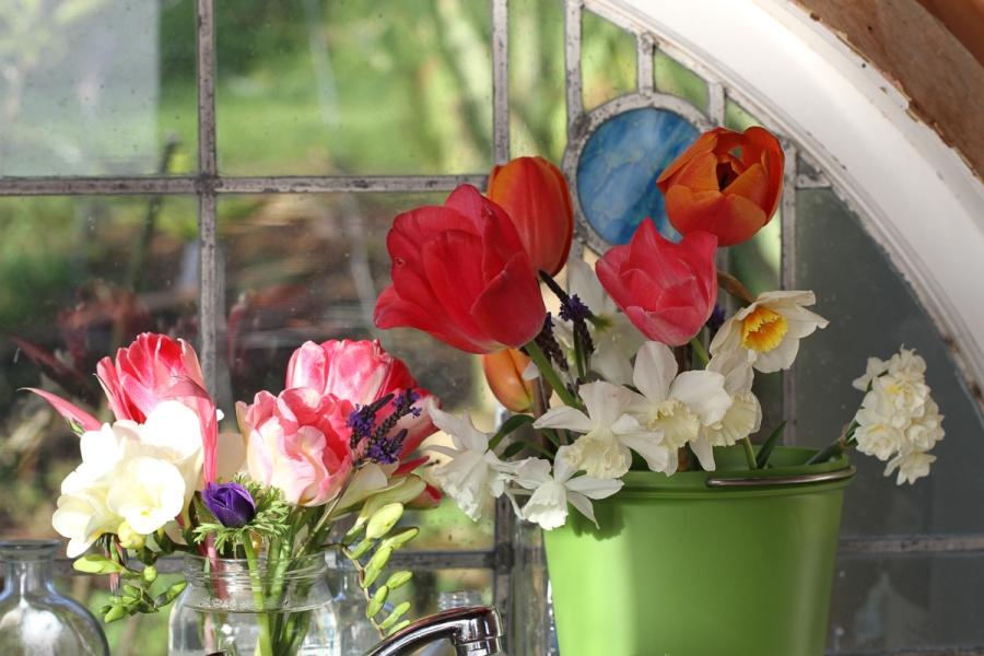 tulips angelique asahi camargue