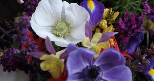 anemone the bride with columbine iris and salvia leucantha