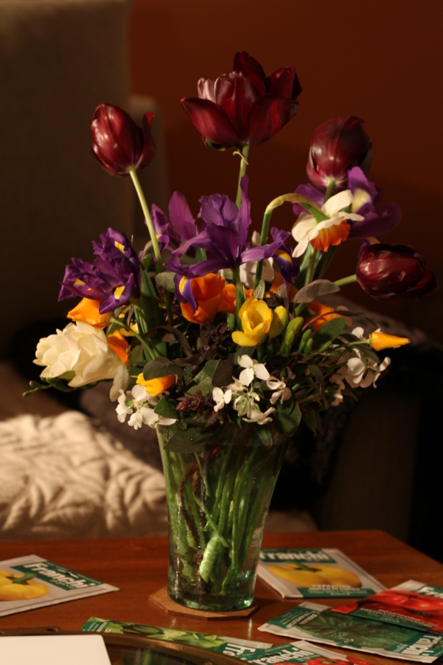 black diamond tulips and dutch iris