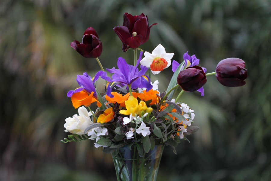 california poppies, narcissus, black diamond tulips, and dutch iris