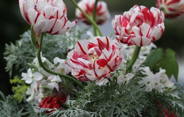carnaval-de-nice-tulips