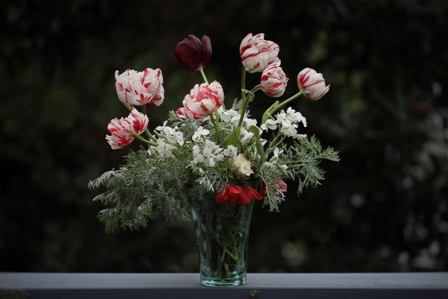 cut-flowers-tulips-carnaval-de-nice