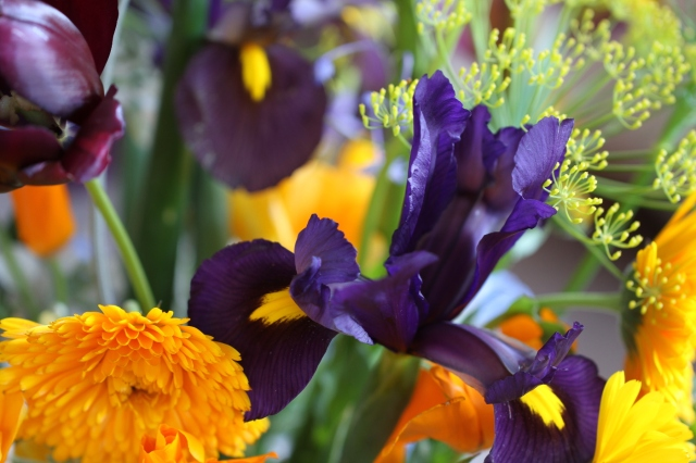 dutch-iris-and-calendula-cut-flowers