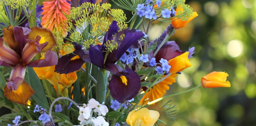 dutch-iris-and california-poppy-cut flowers