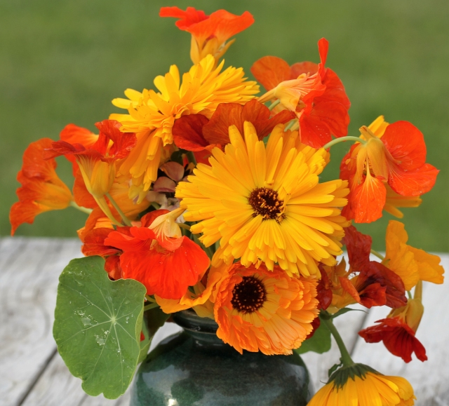 nasturtiums and calendulas cut flowers