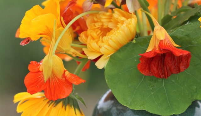 nasturtiums cut flowers