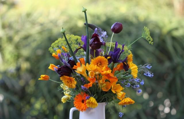 tulips-scilla-natalensis-cut-flowers