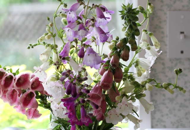 foxglove strawberry merton and penstemon alice hindley cut flowers