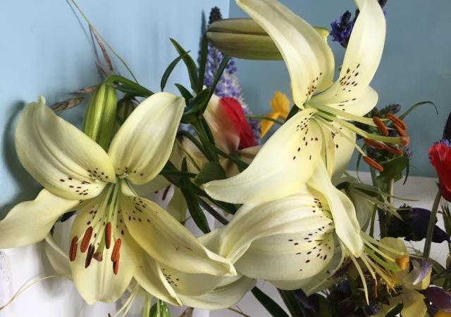 LIly Sweet Surrender cut flowers