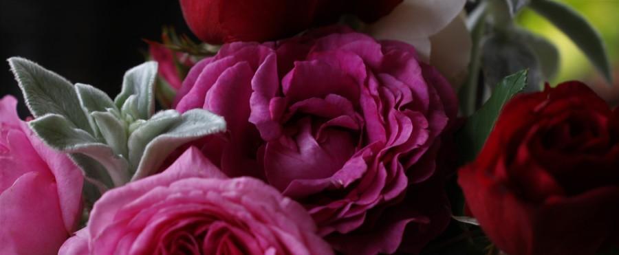 rose chartreuse de parme cut flower