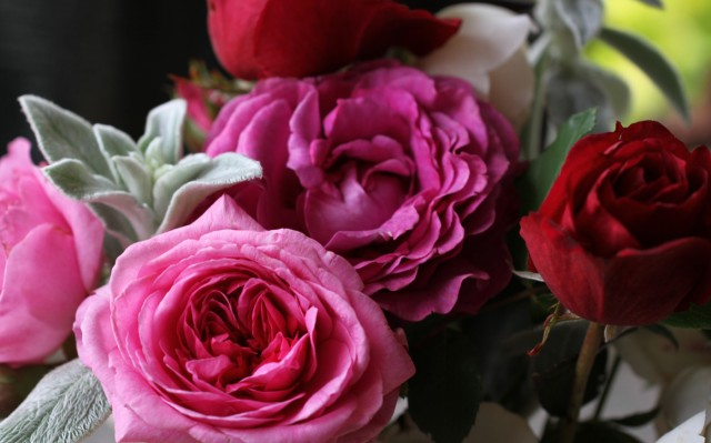 rose gertrude jeykl chartreuse de parme and deep secret