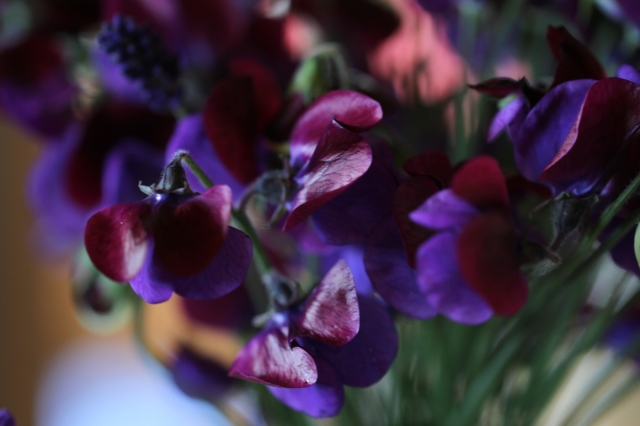 sweet-peas-and-lavender-close-up