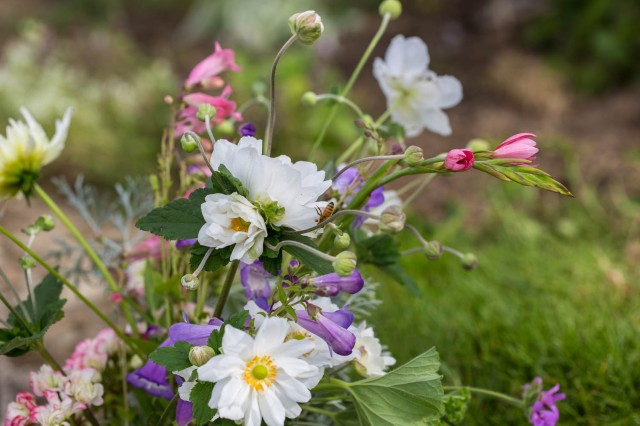 anemones and penstemon with bee