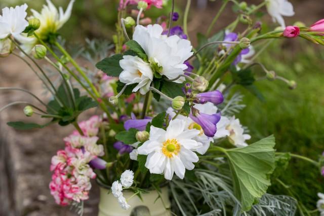 anemones cut flowers