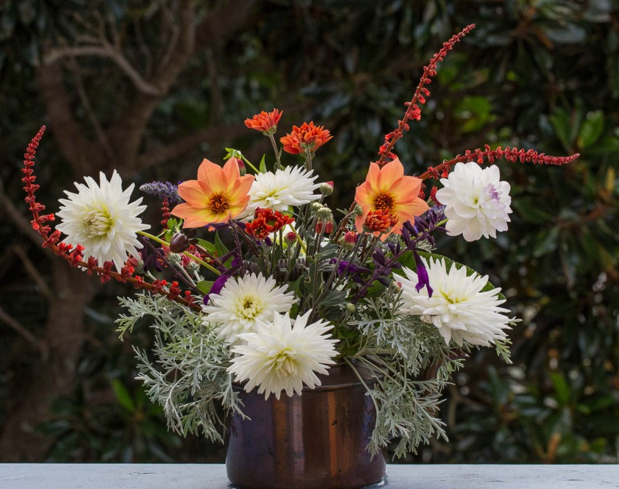 Dahlias, Salvia, and Chrysanthemums Cut flowers