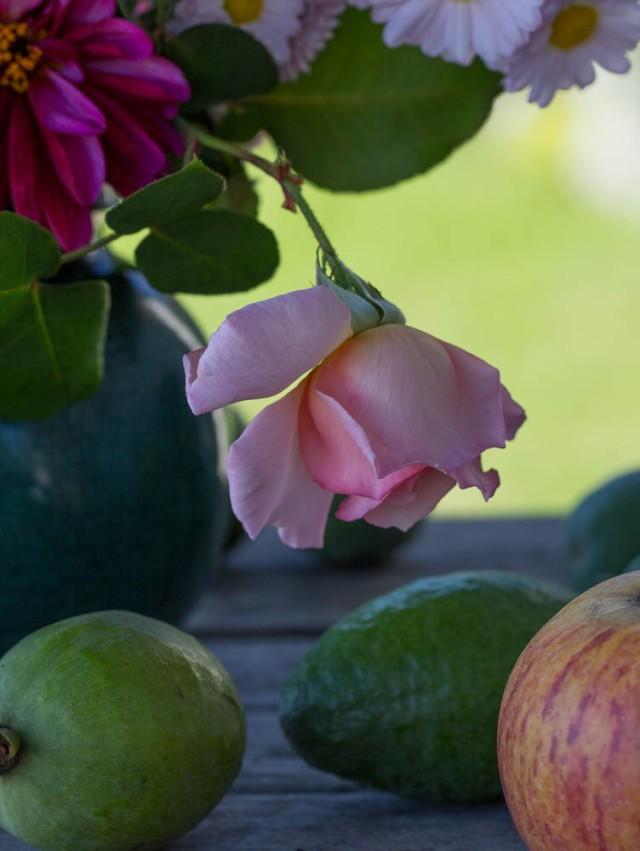 compassion rosebud
