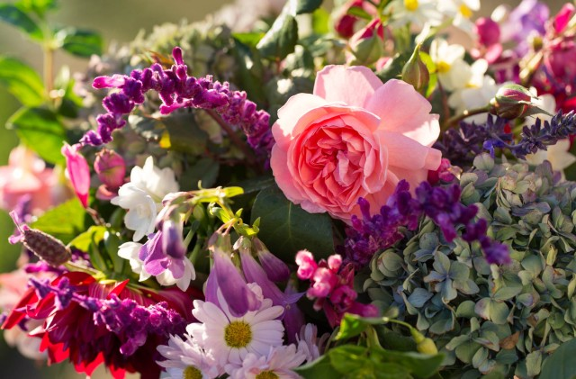 Rose Strawberry Hill with Dahlias and Chrysanthemum