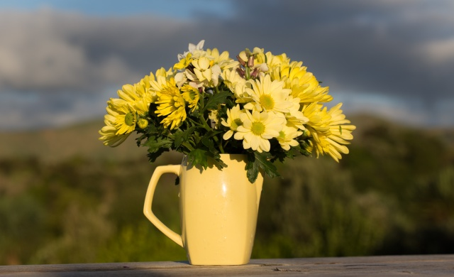 Jug of Chrysanthemums